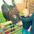 Butlins Easter Spring Farmyard